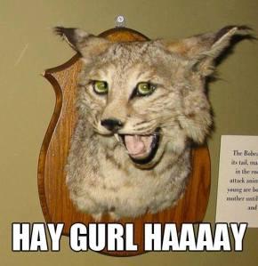 hay-gurl-haaaay